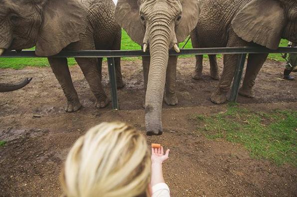 amanda_elephant_sanctuary